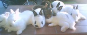 rabbit-24
